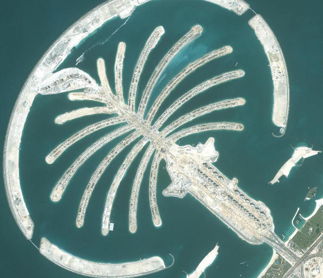 Palm 2006